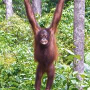 Borneo 2019 - Billy Whitmore