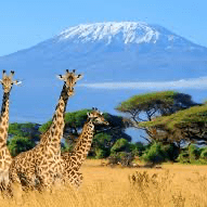 Choose a Challenge Kilimanjaro 2020 - Jack Jacobs