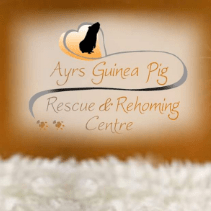 Ayrs Guinea Pig Rescue and rehoming centre
