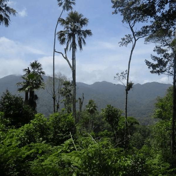 Operation Wallacea Indonesia 2019 - Rhea Harrison