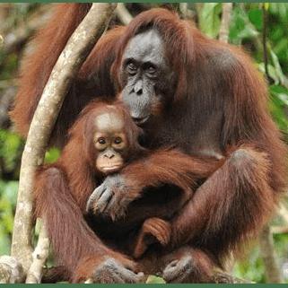 World Challenge Borneo 2020 - Fionn Reid