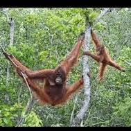 World Challenge Borneo 2019 - Gemma Hotchkiss