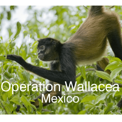 Operation Wallacea Mexico 2019 - Adam Davies-Hall