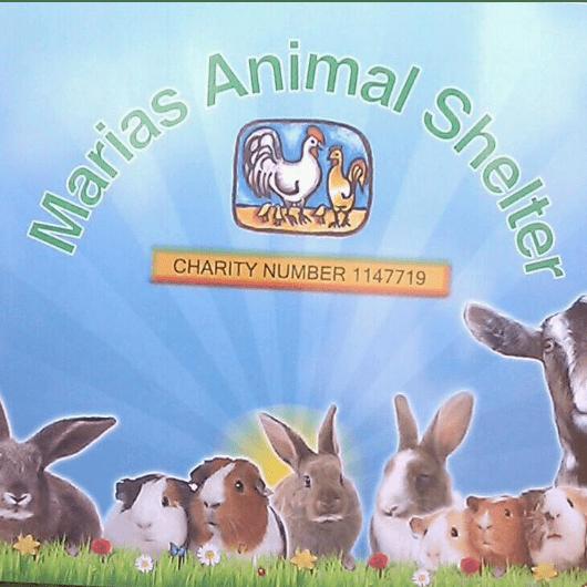 Marias Animal Shelter