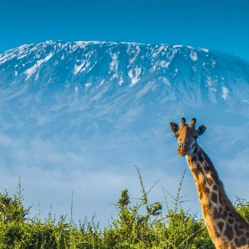 Kilimanjaro Trek for The Children's Society -  Gemma Ellard