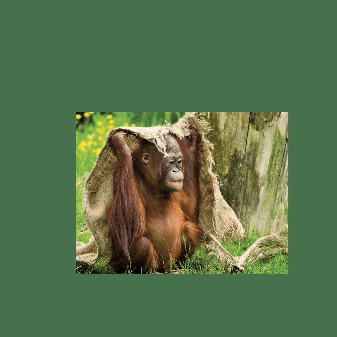 Outlook Expeditions Borneo 2018 - Katie Mcknight