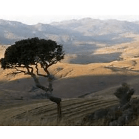 World Challenge Swaziland 2021 - Ben Frere