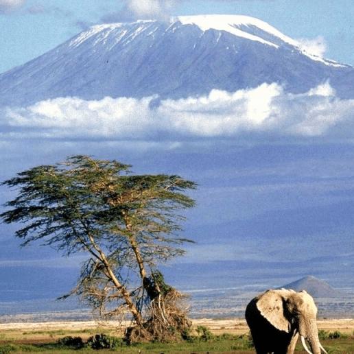 World Challenge Tanzania 2019 - Charlotte Donnelly