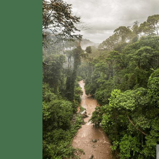 Borneo 2021 - Cerys Money