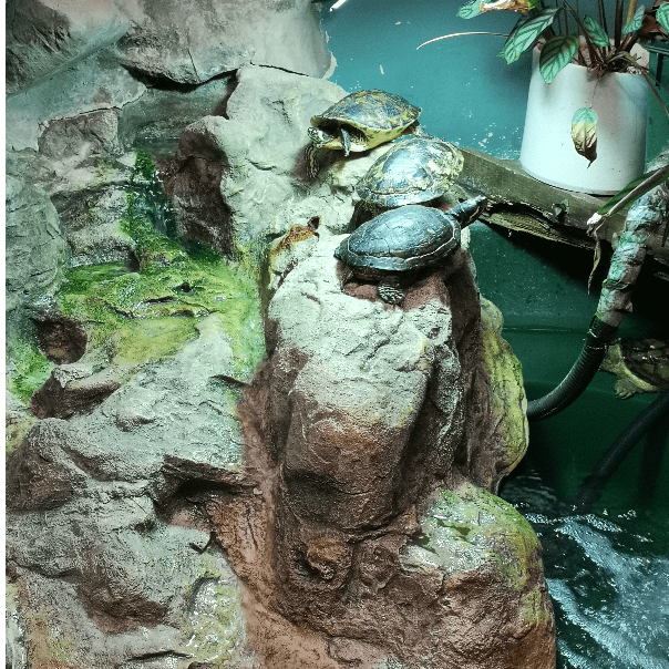 The Reptile Experience Terrapin Sanctuary and Reptile Rescue Centre