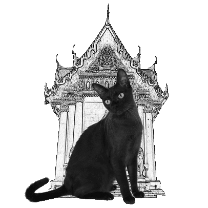 Temple Cat Care