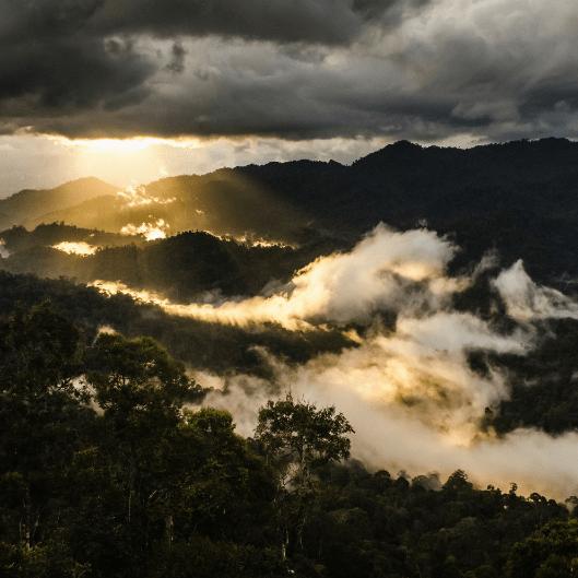 Borneo 2020 - Freya Demarchi