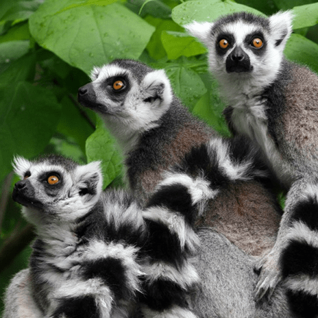 World Challenge Madagascar 2020 - Alex Greggor