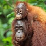 Borneo 2021 - Daniel Cameron