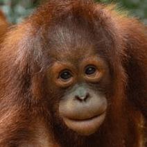 Borneo 2019 - Isobel Swann