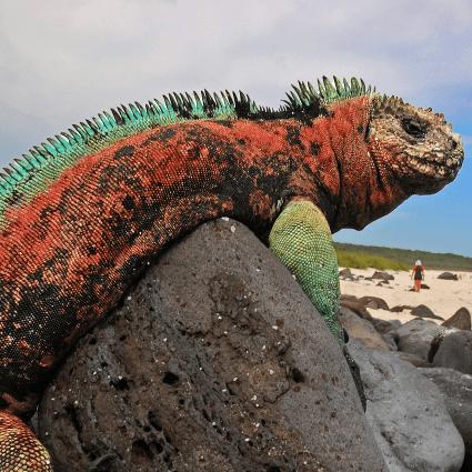 True Adventure Ecuador and Galapagos 2019 - Nicholas Gear