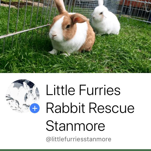Little Furries Rabbit Rescue