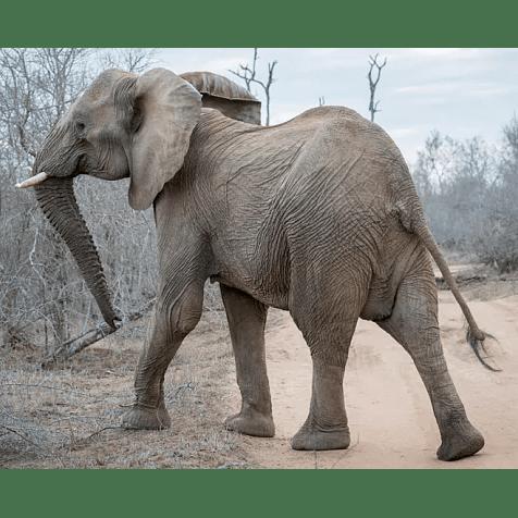 True Adventure Swaziland 2019 - Harry Fisher