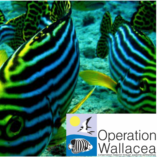Operation Wallacea Indonesia 2019 - Cathy Cussans