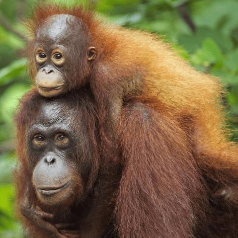 Borneo 2020 - Samantha Addison