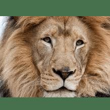 Operation Wallecea South Africa 2019 - Julia Cypcar