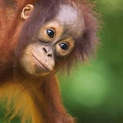 Borneo - Meadow Docherty