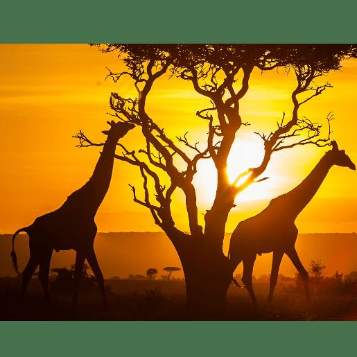 Kenya 2019 - George Hughes