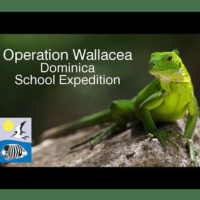 Operation Wallacea Dominica 2019 - Tom Cobb