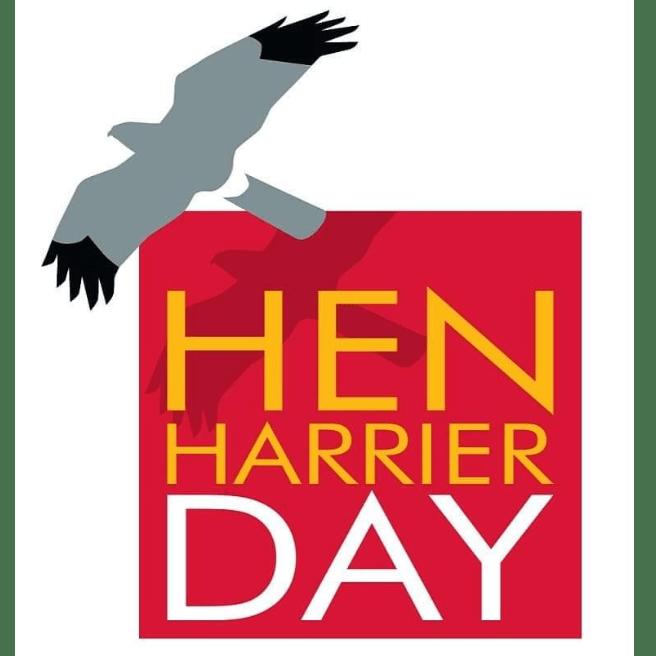 Hen Harrier Action