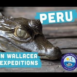 Operation Wallacea Peru 2021 - David Blahout