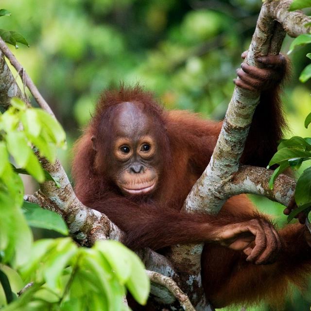 World Challenge Borneo 2022 - Emma Declerck