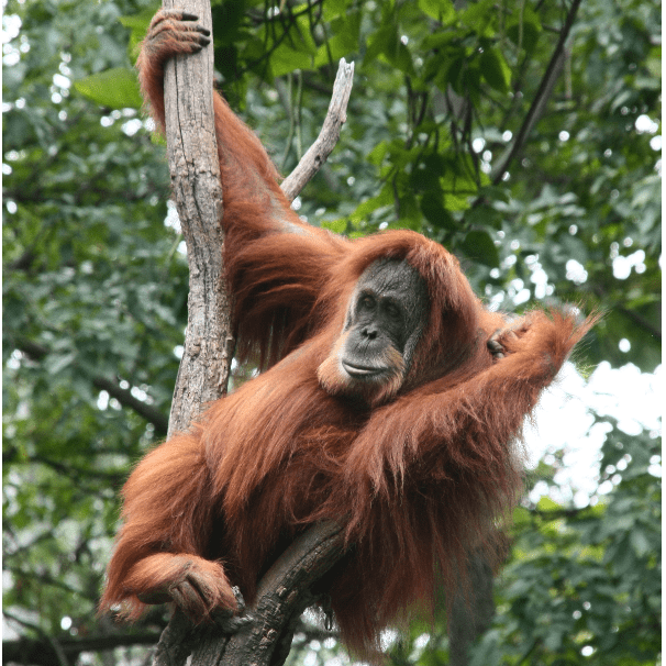 Venture Force Sumatra 2020 - Alister Kingsland