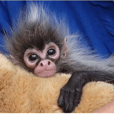 Spider Monkeys in Mexico - Hannah Brown
