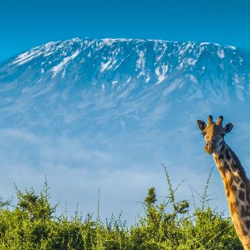 Meningitis Research Foundation Kilimanjaro 2018 - Danielle Rowe