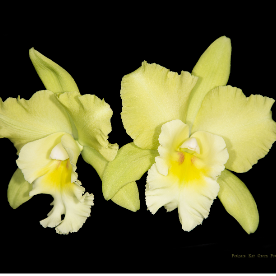 Hinckley & District Orchid Society