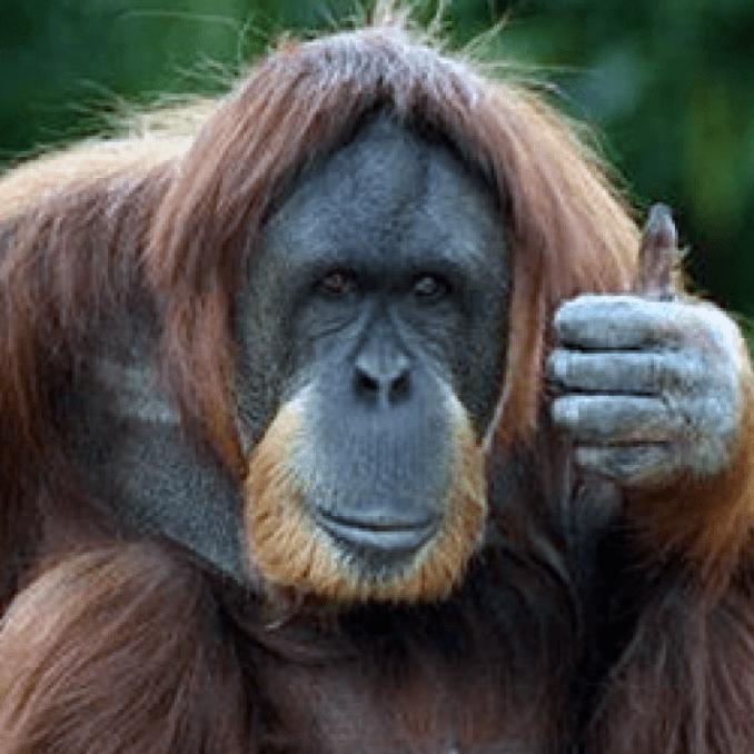 World Challenge Borneo 2020 - Luke Robinson