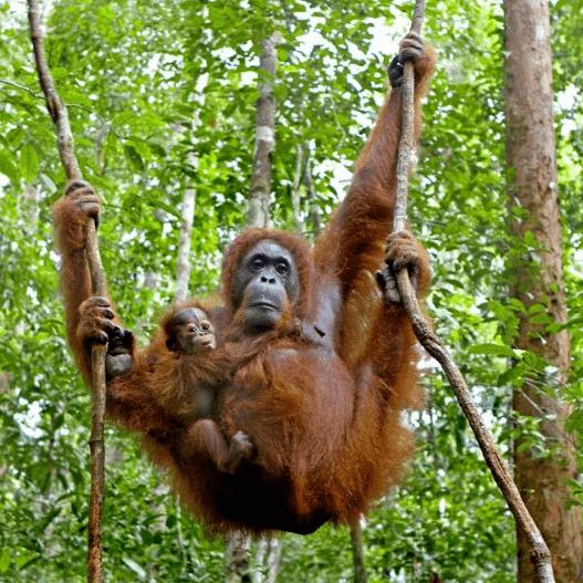 Operation Wallacea Borneo 2019 - Rebecca Hall