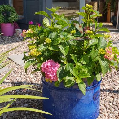 Rutland Dr grows garden