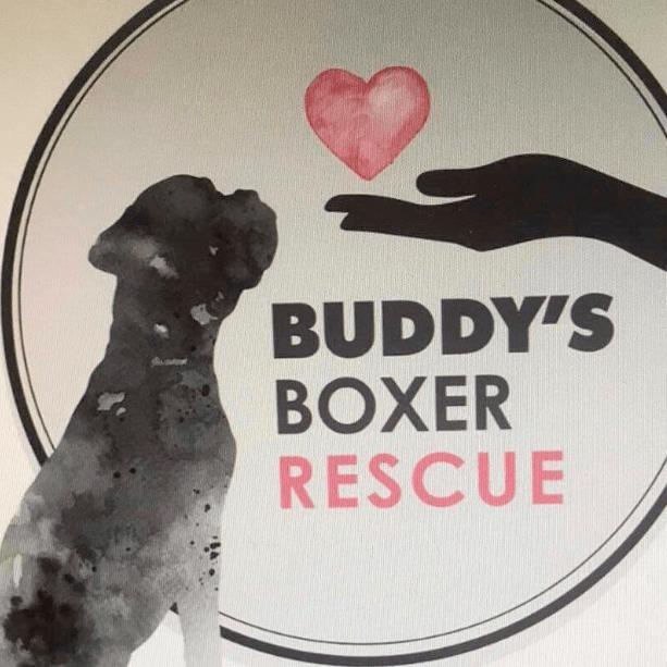 Buddy's Boxer Rescue