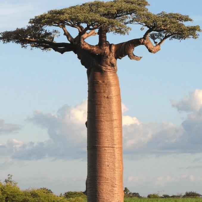 Madagascar 2020 - Javier Zurita