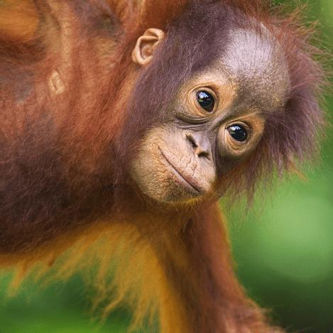 Camps International Borneo 2019 - Jess Firkins