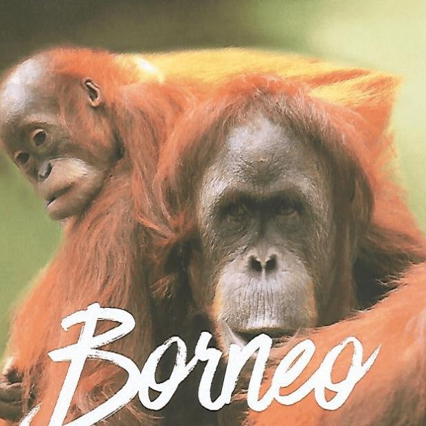 World Challenge Borneo 2021 - Grace Read