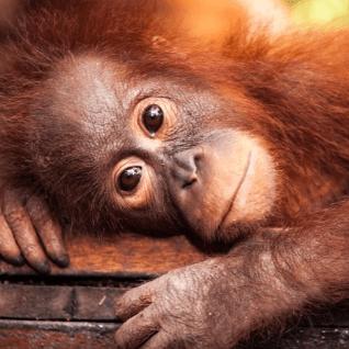 World Challenge Borneo 2022 - Emma Milner