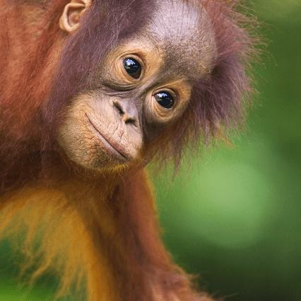 Camps International Borneo 2018 - Elizabeth Brittan