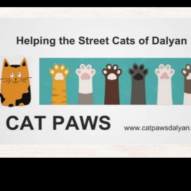 Cat Paws Dalyan