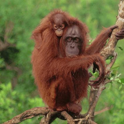 Borneo 2021 - Lily Fitzsimons
