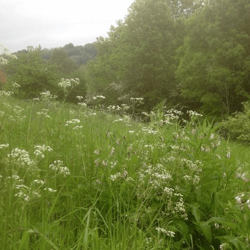Charlea Community Gardens