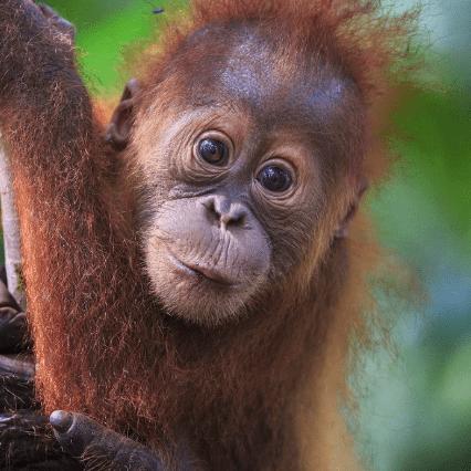 Borneo 2020 - Carly Williams