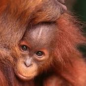 Borneo 2020 - Lucy Attock