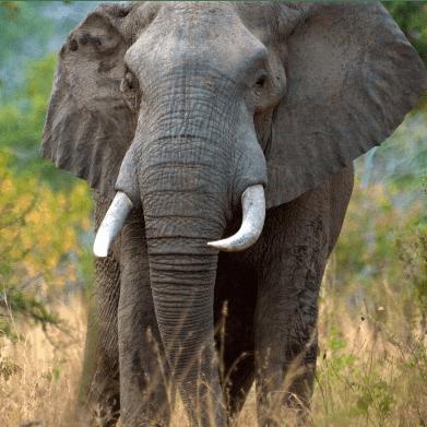 True Adventure Tanzania 2021 - Aditi Mani